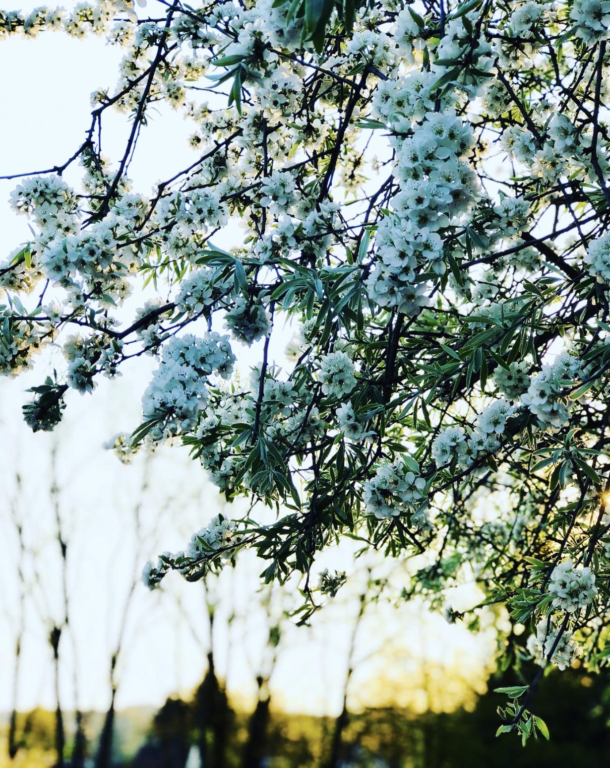 Blüten im Sonnenaufgang