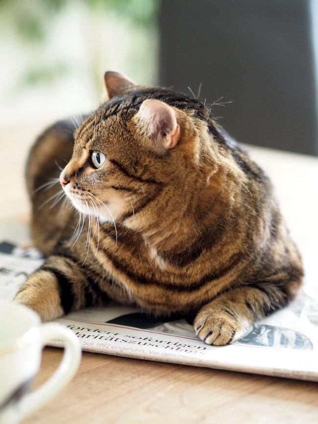 Erziehung bei Katzen ist ganz einfach – nach wenigen Tagen machst Du das, was sie wollen.