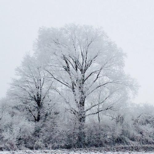 Winterlandschaft in Schwarzweiß