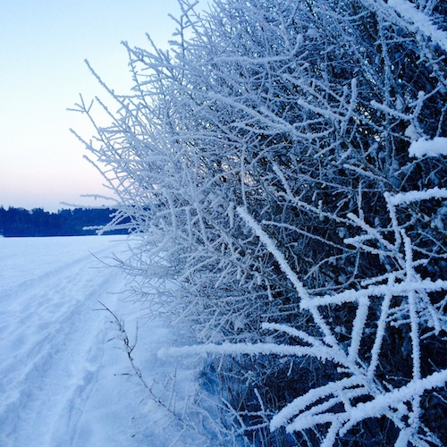 Frostiger Wintertag